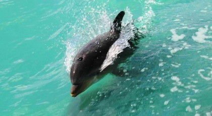 Dolphin-Watch-Boat-Tours-420x230 - pga village