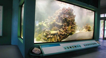 St-Lucie-County-Aquarium-420x230 - pga village